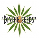Лучшие семена конопли на сайте World-cannabis в оригинале!