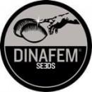 Заказать семена марихуаны в оригинальных упаковках от DINAFEM