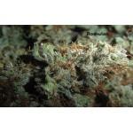 Топ-5 самых лучших сортов конопли по версии worldcannabis